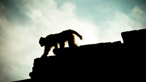 Adieu macaque. © Sandy