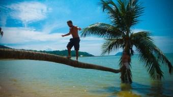 Le palmier genre star II © Elodie