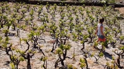 Dans les vignes © Topich