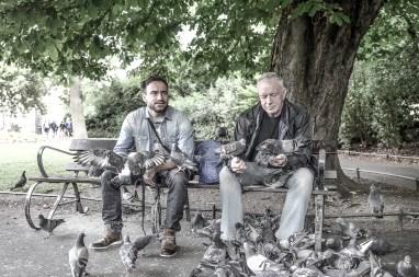 Mister Pigeons © Yopich