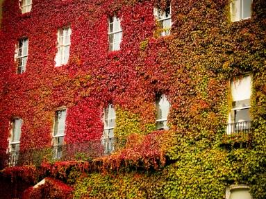 Mur végétal automnal © Topich