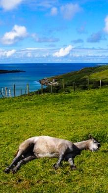 Le cheval dort © Topich
