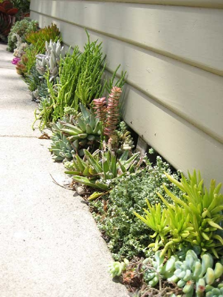 TOP 10 DIY Outdoor Succulent Garden Ideas - Top Inspired on Tree Planting Ideas For Backyard id=38399