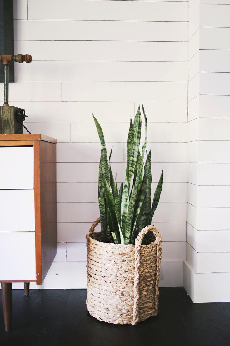 Indoor Plant Basket