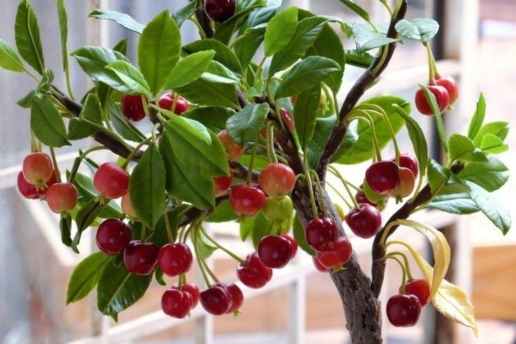 5. Cherries