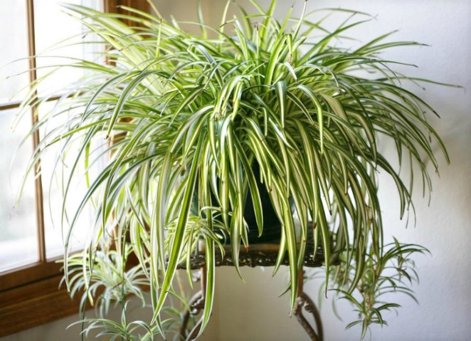 Top 10 Easy To Grow Plants with Great Health Benefits