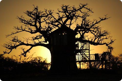 baobab2 Top 25 des hôtels les plus insolites du monde