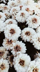 50+ Beautiful Flower Wallpapers For iPho