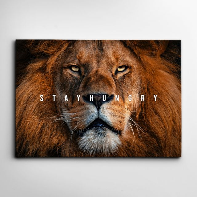 STAY HUNGRY LION - 18 x 12 / Lite 0.75