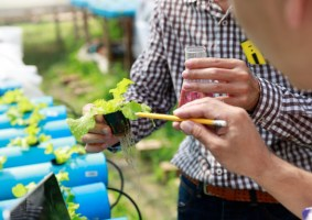 hydroponics-hoagland-solution