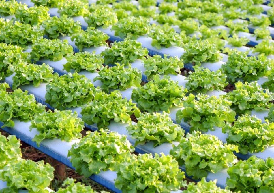topraksız tarım ekonomik mi, topraksız tarım kazançlı mı