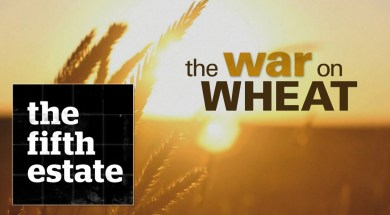 The War On Wheat The Fifth Estate