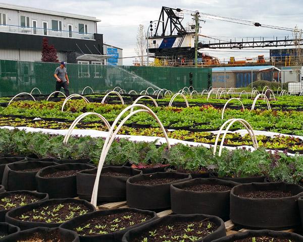 TOPSOIL urban farming in Victoria BC