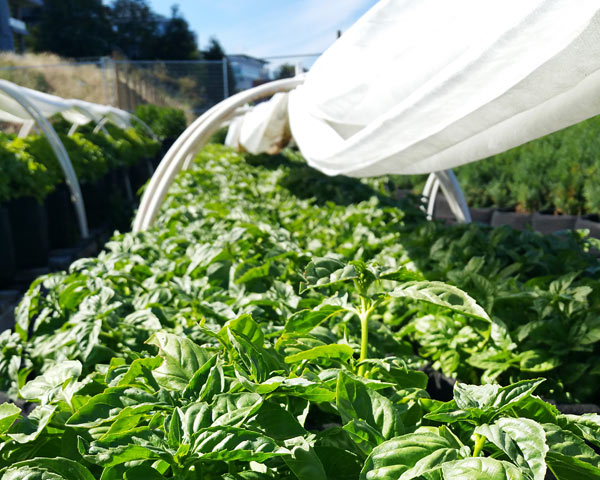 2016 TOPSOIL GrowSpace at Dockside Green