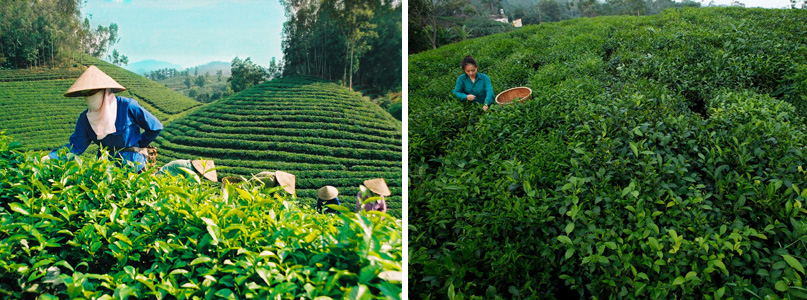 best countries for tea export