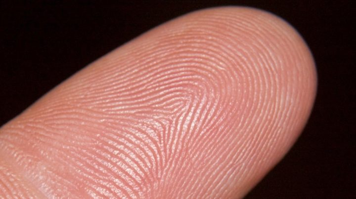 The Identity in the Fingerprint