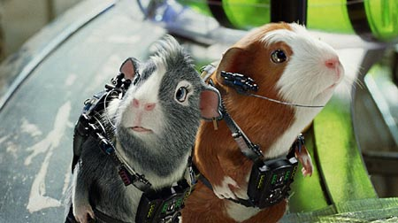 g force guinea pigs