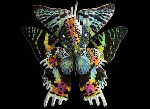 Ten of the Worlds Rarest and Most Unusual Butterflies