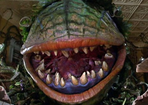 Ten Scary Plants That Eat Animals That You Might Want to Avoid