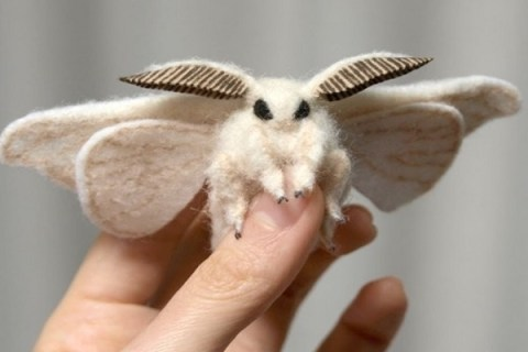 Ten of the Worlds Rarest and Most Unusual Moths
