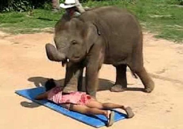 The Elephant Massage