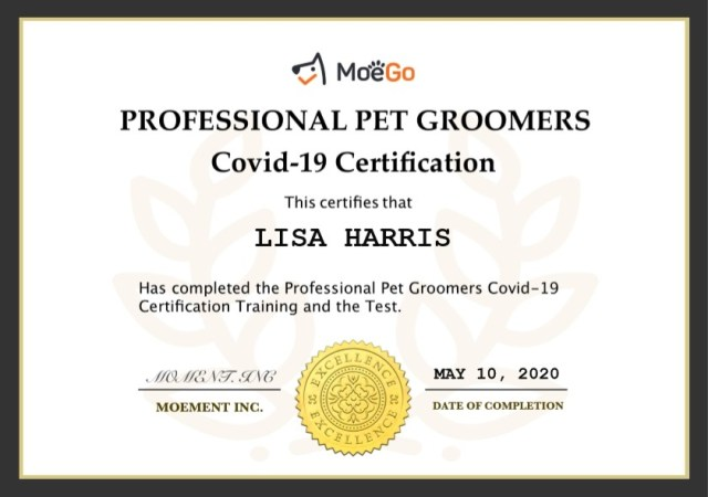 bexhill dog grooming top to tail dog groomers bexhill on sea covid 19 certification