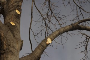 trimmed tree service
