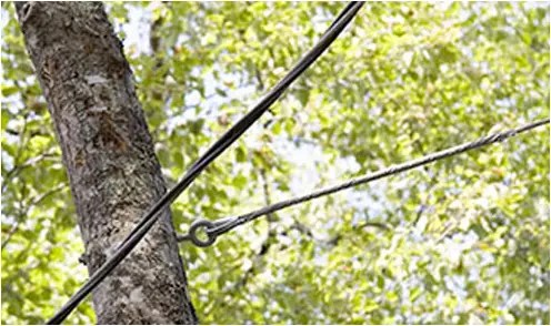 Cable Bracing Top Tree Service
