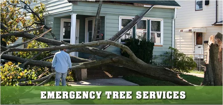 Emergency Service Top Tree Service Newark