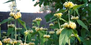 Vaste planten, gekozen op bloeiwijze, bladvorm en bloeitijd