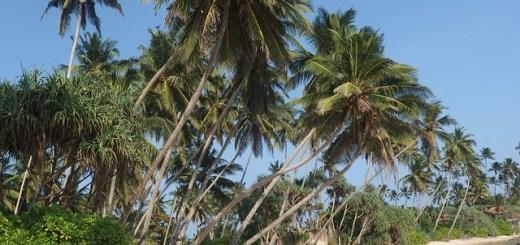 Sri Lanka aanbieding