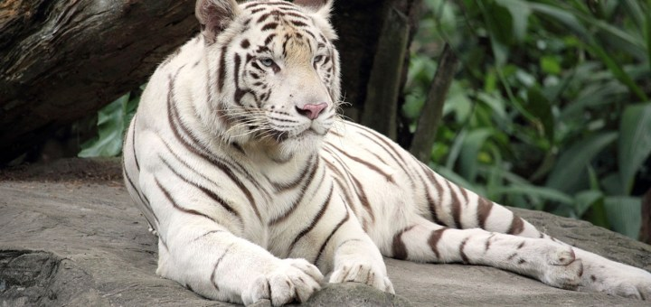 zoo parc overloon korting