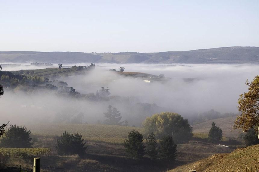 Elgin_Ridge_1 (misty moody)