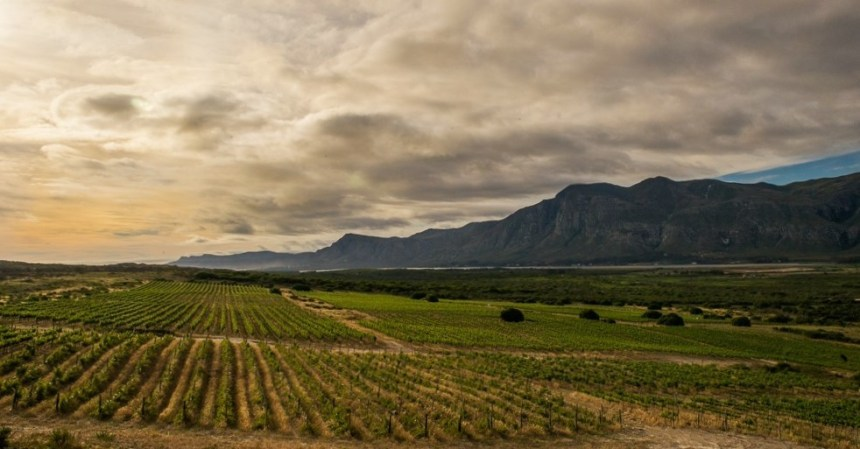 Springfontein winefarm in Stanford, South Africa. Photography by Clare Louise Thomas