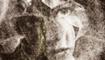 Amiee Stewart, Lovecraft