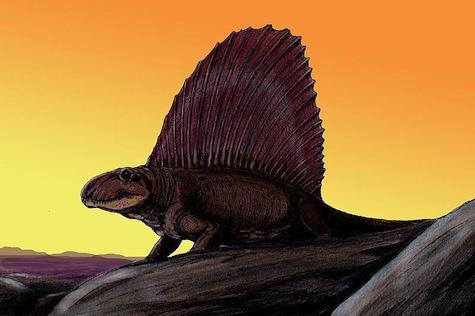 Dimetrodon by Dmitry Bogdanov
