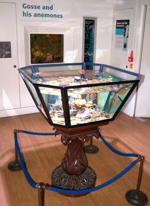 Gosse-Aquarium