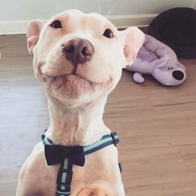 Blanco Friends of Homeless Animals Patrick Stewart dog