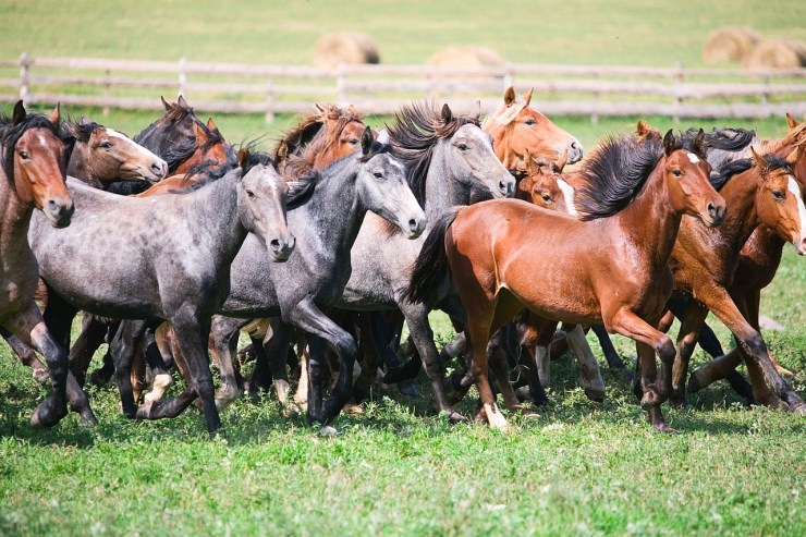Blog Post Featured Image - Understanding and Writing Horses: Creatures of Habit