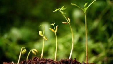 Photo de Le Omer, première étape de la croissance de l homme