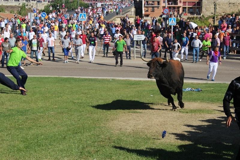 Rechazado el recurso contra el decreto de la Junta que prohibió la muerte del Toro de la Vega