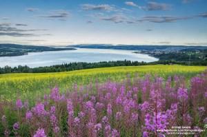 Sommerlig og fargerik utsikt over Gjøvik fra Bråstad