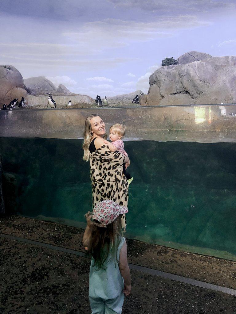 The Perfect Day Trip   John Ball Zoo