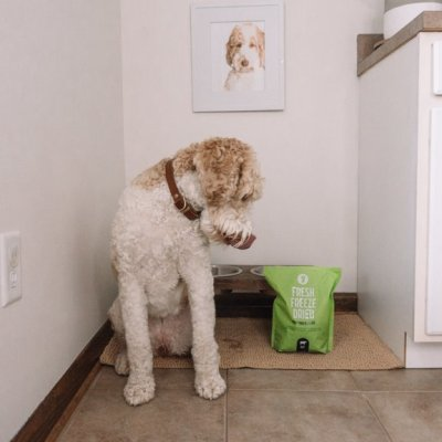 The Perfect Dog Food to Support Wellness and Gut Health | Get Joy