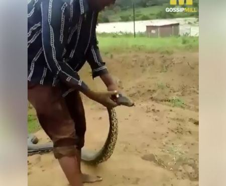 Man Force Gigantic Python Out of Its Cave