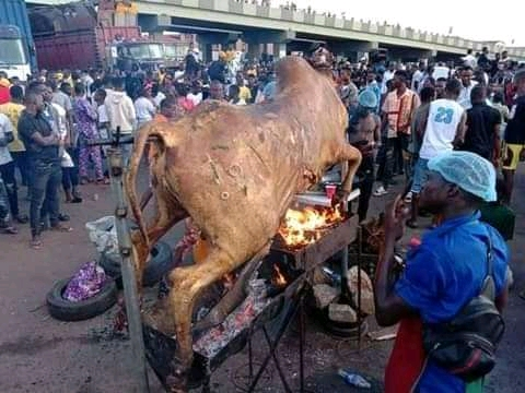 The cow killed and roasted by protesters
