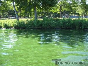 Toxic Blue-Green Algae