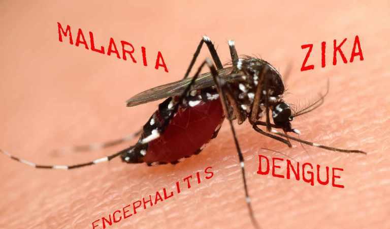 Tra poco torneranno le zanzare. E con esse fastidi e malattie, ma c'è una canzone che le ferma
