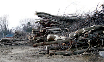 Hundreds of trees and shrubs were cut down