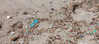 Litter on the Galloway and Guildwood beach. (Selena Mann/Toronto Observer)